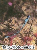 Фотографии природы, учебник скачать