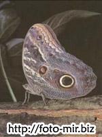 Учебник скачать, фото бабочек